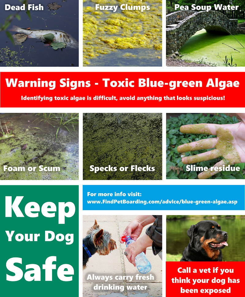 Keep your dog safe by learning to spot toxic blue-green algae