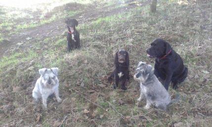 Home Dog Boarding Aberdeenshire
