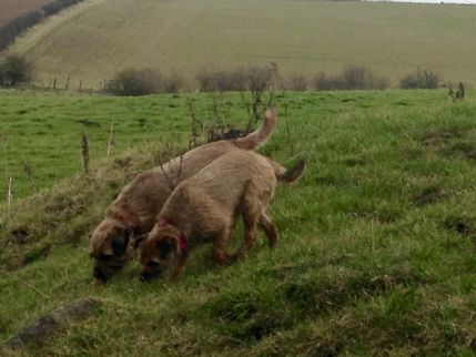 Boarding Dog Kennels Midlothian