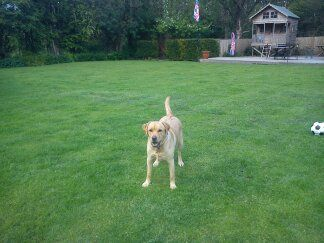 Dog Boarding Kennels Berkshire