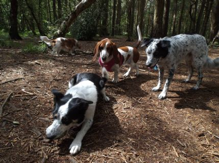Dog Home Boarding Wirral