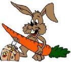 Bunny Boarding