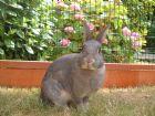Rabbit Inn