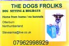 THE DOGS FROLIKS