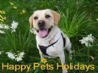 Happy Pets Holidays